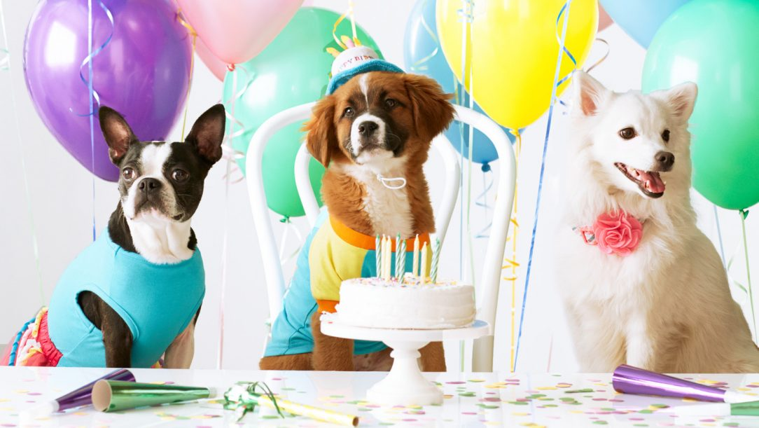 A pet's birthday party with balloons and cake