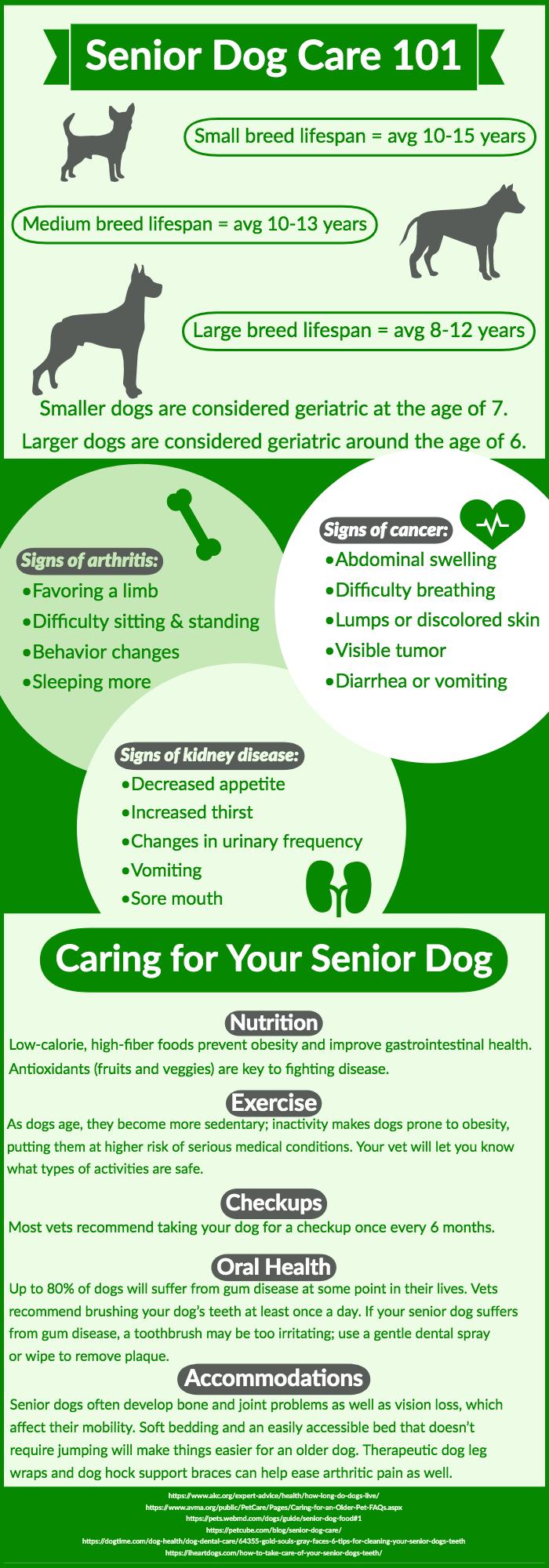 Senior Dog Care 101