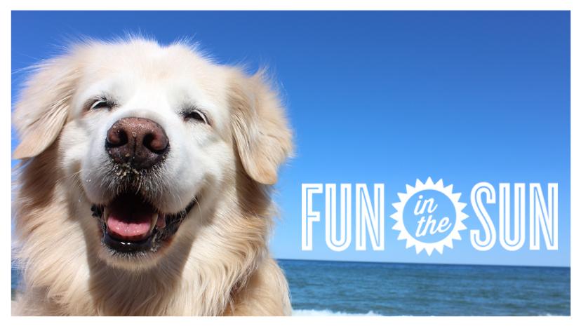 Fun in the sun pooch